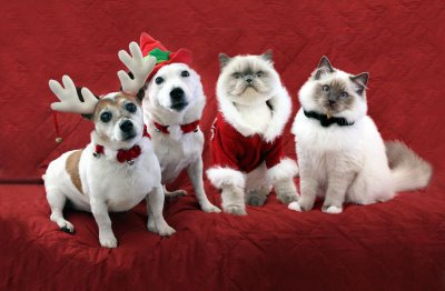 foto perros y gatos disfrazados navidad